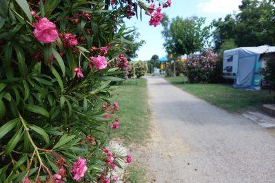 CALA-GOGO-Un camping fleuri-SAINT CYPRIEN