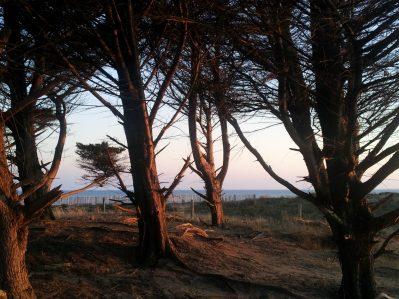 LA FORET-Accès direct à la plage pour le camping LA FORET-SAINT JEAN DE MONTS
