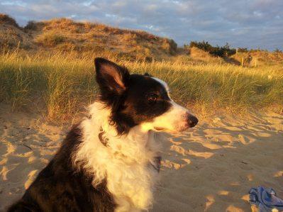 LA FORET-La plage-SAINT JEAN DE MONTS