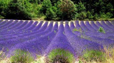 LA FARIGOULETTE-Le camping LA FARIGOULETTE, les Alpes-de-Haute-Provence-SAINT LAURENT DU VERDON