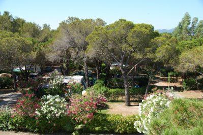 LA BAUME LA PALMERAIE-Les emplacements du camping LA BAUME LA PALMERAIE-FREJUS