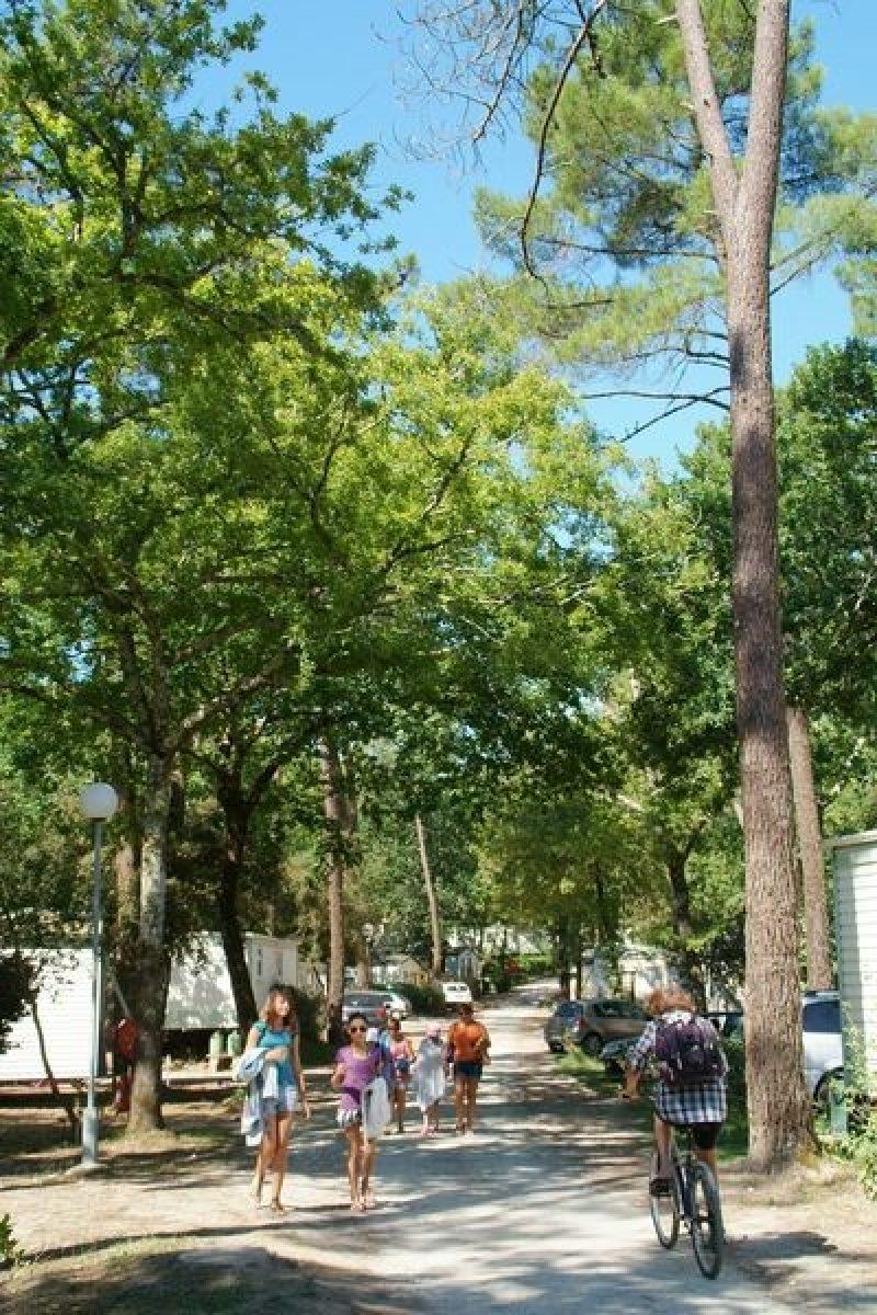 LES PINS DE LA COUBRE-Un camping en pleine nature-MATHES
