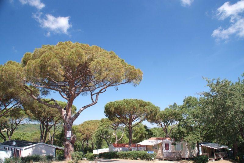 CAMPING PARC MONTANA-Un parc locatif ombragé das Departement Var-GASSIN